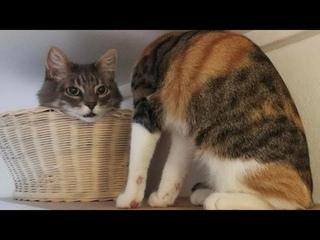 ПРИКОЛЫ С ЖИВОТНЫМИ 😺🐶 Смешные Животные Собаки Смешные Коты Приколы с котами Забавные Животные #107