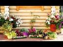 Ландшафтный дизайн для садового участка. 75 Оригинальных идей / 75 ideas for the garden / A - Video