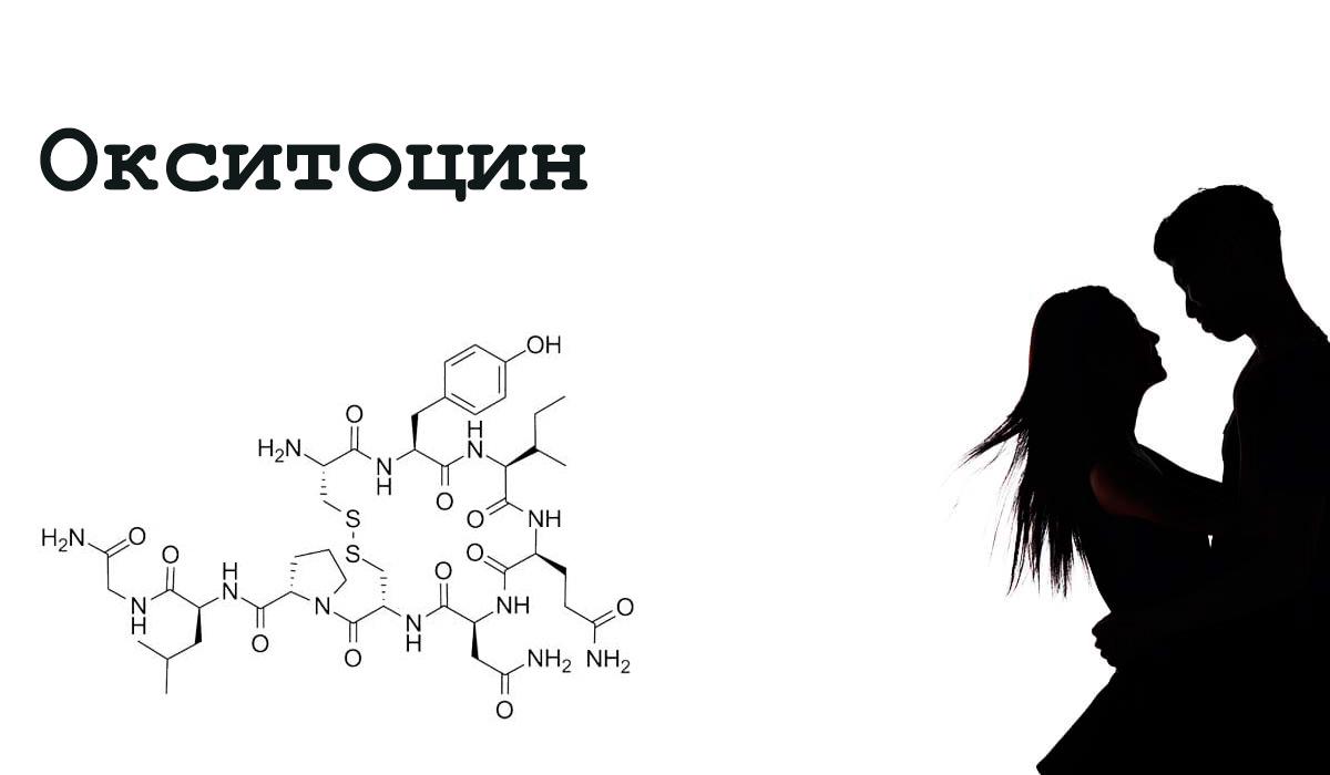 Окситоцин выделяется при влюбленности.