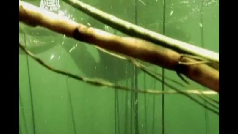Необычные животные Ника Бейкера Морщинистая лягушка Титикакский свистун