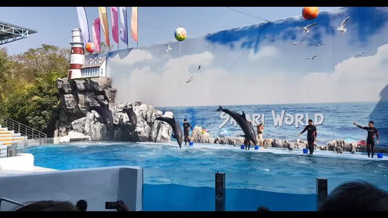 Бангкок. Шоу дельфинов в Marine Park, лучшее. Часть 2