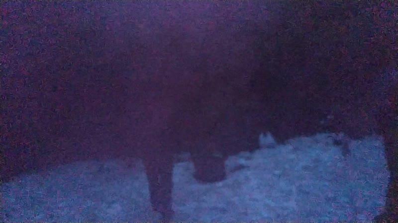 Камчатка 19 Дымовухи от медведей