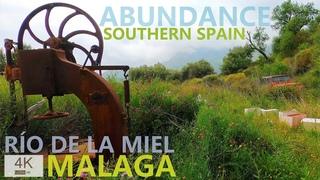 Прогулка по долине Рио-де-ла-Миэль /Río de la Miel (Медовая Река), Испания, Малага, Андалусия    Изобилие дикой природы   Заброшенные дома и земли
