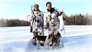 Очень удачная охота на зайца зимой.  Охота с собакой.  Зайцы бегут к нам сами!
