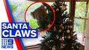 Koala wanders into family's Christmas tree 9 News Australia