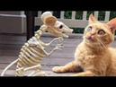 Я РЖАЛ ПОЛ ЧАСА , СМЕШНЫЕ ЖИВОТНЫЕ , ПРИКОЛЫ С КОТАМИ И СОБАКАМИ, ЛУЧШИЕ ПРИКОЛЫ, Funny Pets 39