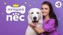 Новое шоу! | Лучший пес | с 19 сентября в 12:00 на ТВ-3
