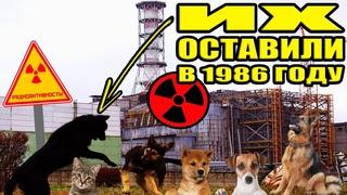 Брошенные животные в Чернобыле и Припяти.........................................#чернобыль #припять