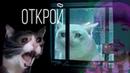 Alex Pummet, Яша — ОТКРОЙ мне Грустная Песня, Поющий Кот