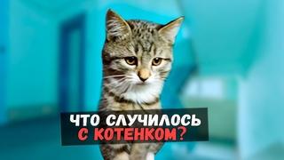 Спасение котенка из подъезда. Грустная история со счастливым концом / SANI vlog