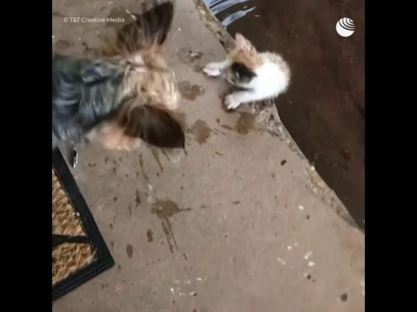 Собака привела домой бездомного котенка