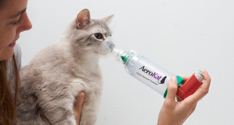Астма у кошек, изображение №2