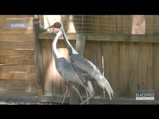 У Харківському екопарку оселилися незвичайні птахи
