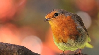 Peaceful Relaxing Instrumental music, Meditation Calm Music Meadow Birds by Tim Janis