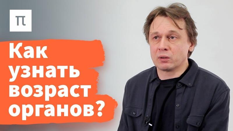 Эпигенетические часы — Вадим Гладышев ПостНаука