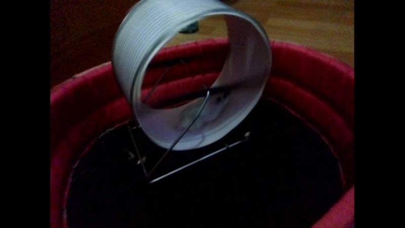 джунгарский хомяк стирается в колесе 20 см