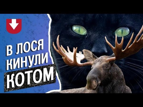 В Башкирии заблудившегося лося прогнали котом