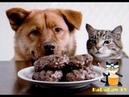 Враг или друг Снова вместе! Подборка приколов с кошками и собаками