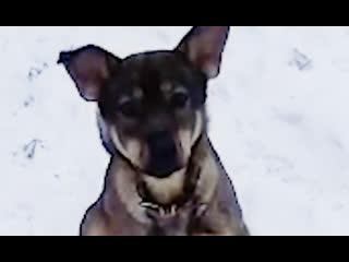 На московских волонтёров завели уголовное дело за спасение собаки