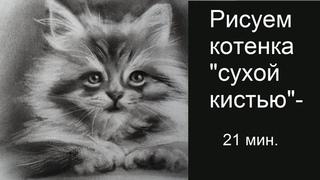 Как нарисовать котенка урок рисования сухой кистью. Учимся рисовать животных, создаем рисунок кота
