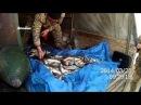 Задержана «Газель» с рыбой частиковых пород