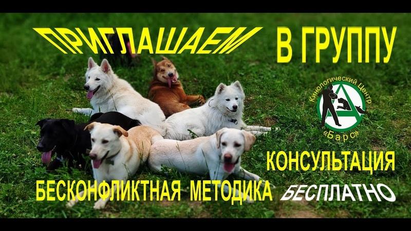Групповые занятия. Кинологический центр Барс. Отзыв. Дрессировка собак в Новосибирске