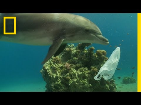 How We Can Keep Plastics Out of Our Ocean National Geographic