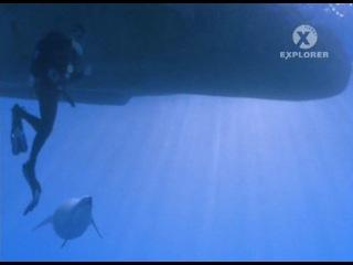 Прогулки с морскими чудовищами. Вторая серия. В челюстях у смерти