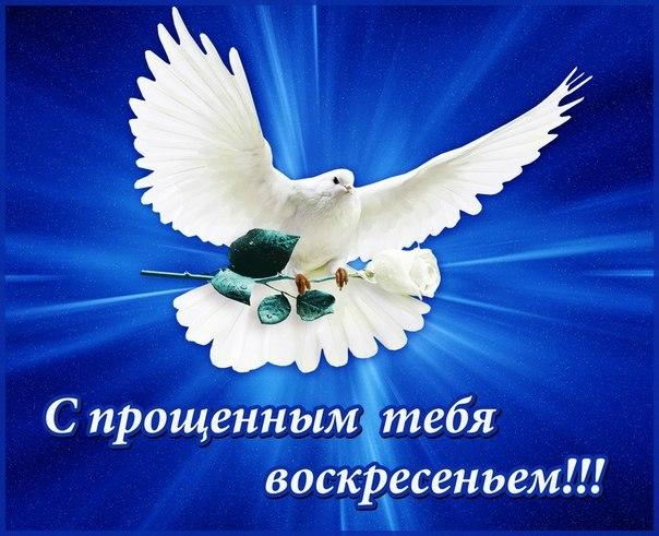 школьного открытка с голубем прощенное воскресенье иглы большим
