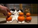 Приколы с котами - Самые Невозмутимые котики! - YouTube