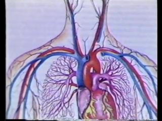 Анатомия и физиология человека. Фильм 1