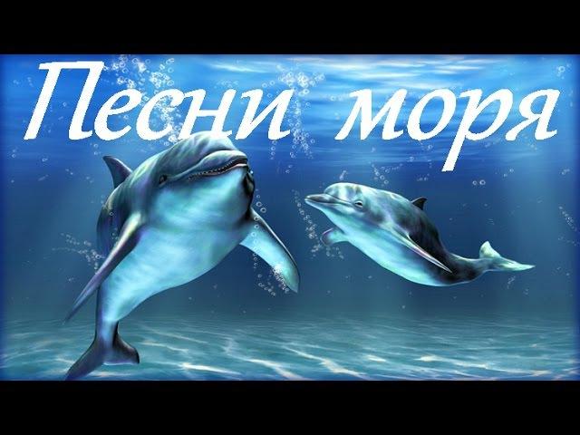 1 Hr Пение Дельфинов и Звуки Океана Dolphins and Ocean Sounds