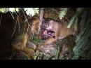 Bite Club Cougar Vs Wolf In Rare Fight To The Death
