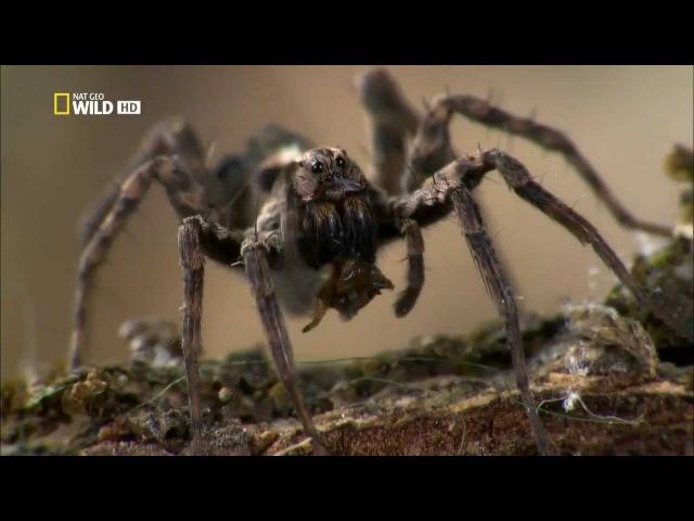 Супер паук Super Spider 2012