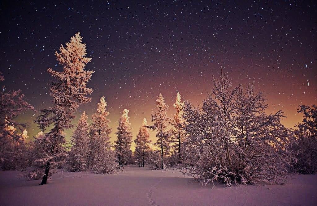 размахова фото лес зима полночь химическая завивка все