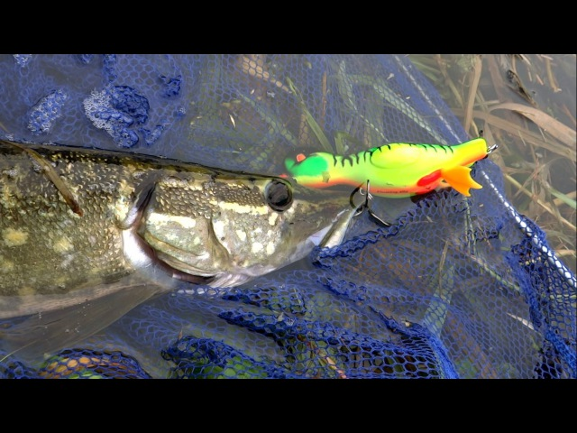 Testing new fishing lure pike attack Danny the Duck Рыбалка щука атакует Данни утёнка