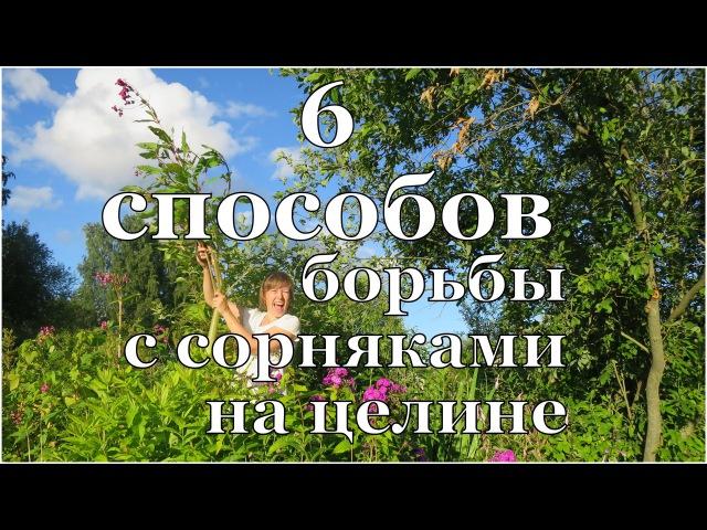6 способов БОРЬБЫ с СОРНЯКАМИ на целине 6 ways to control weeds in the virgin location