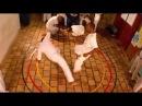 Mestre Bimba A Capoeira Illuminada