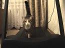 Кот на беговой дорожке.wmv