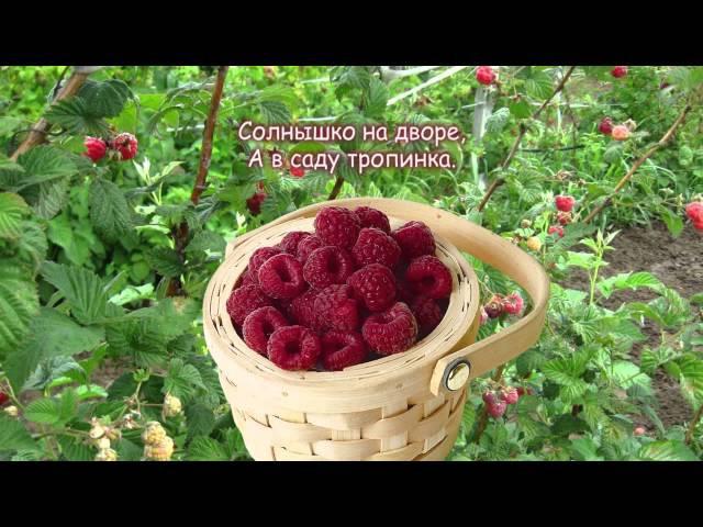 стирки картинки сладкая ты моя ягодка малинка этих местах