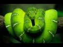 Cosmosis - Dance Of The Cosmic Serpent
