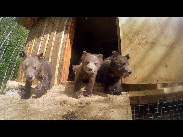 Интернат для медвежат