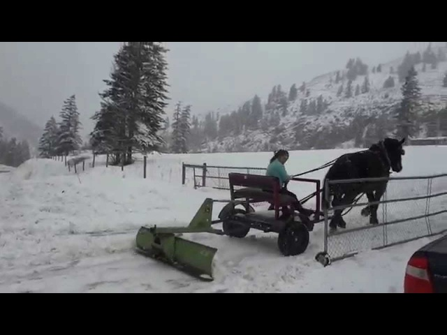 Foggy Mountain Snow Horse Plowing