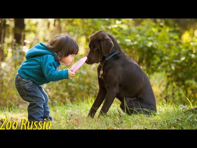 Ребенок и собака борются за фрисби ZooRussia