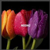 MODNO_shop
