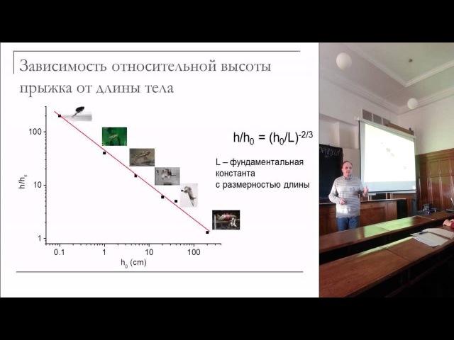 Псевдонаучная конференция ФФ 2014. Лектор Д. Р. Хохлов - Прикладная теория прыжков в высоту