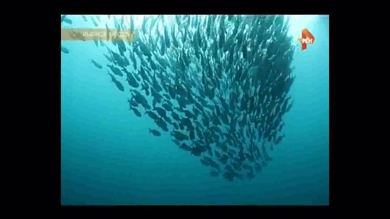 Рыбное место (25.11.2016,Клёва не будет,Ненатуральный продукт,рыбный промысел в морской бой