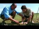 Animal planet Большие и страшные Анаконда 1 сезон 1 серия MP4