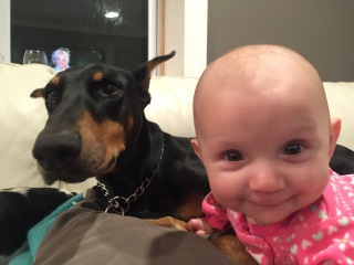 Doberman Dog Gives Baby Hugging & Kissing And Playing Happy Together - Dogs And Baby Videos 2016