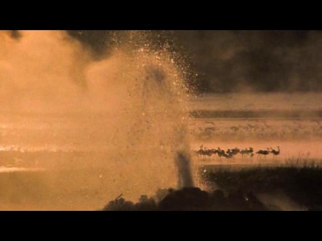 BBC: Жизнь птиц: Хищники / 4 серия